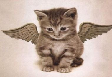 Einsteins Katzenbuckelflügel und was er uns über die Menschen lehrt.